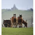 Fotografía de caballos en el Pantano del Ebro