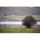 Fotografía de una encina en el Pantano del Ebro